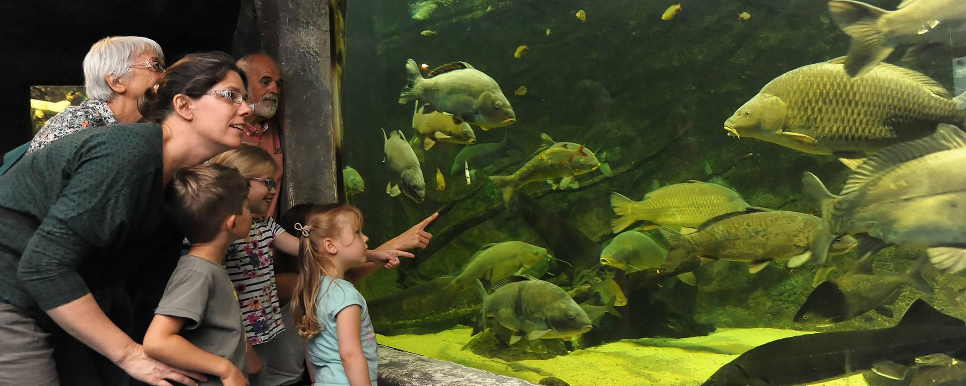 Visite de l'aquarium de Pescalis pendant les vacances