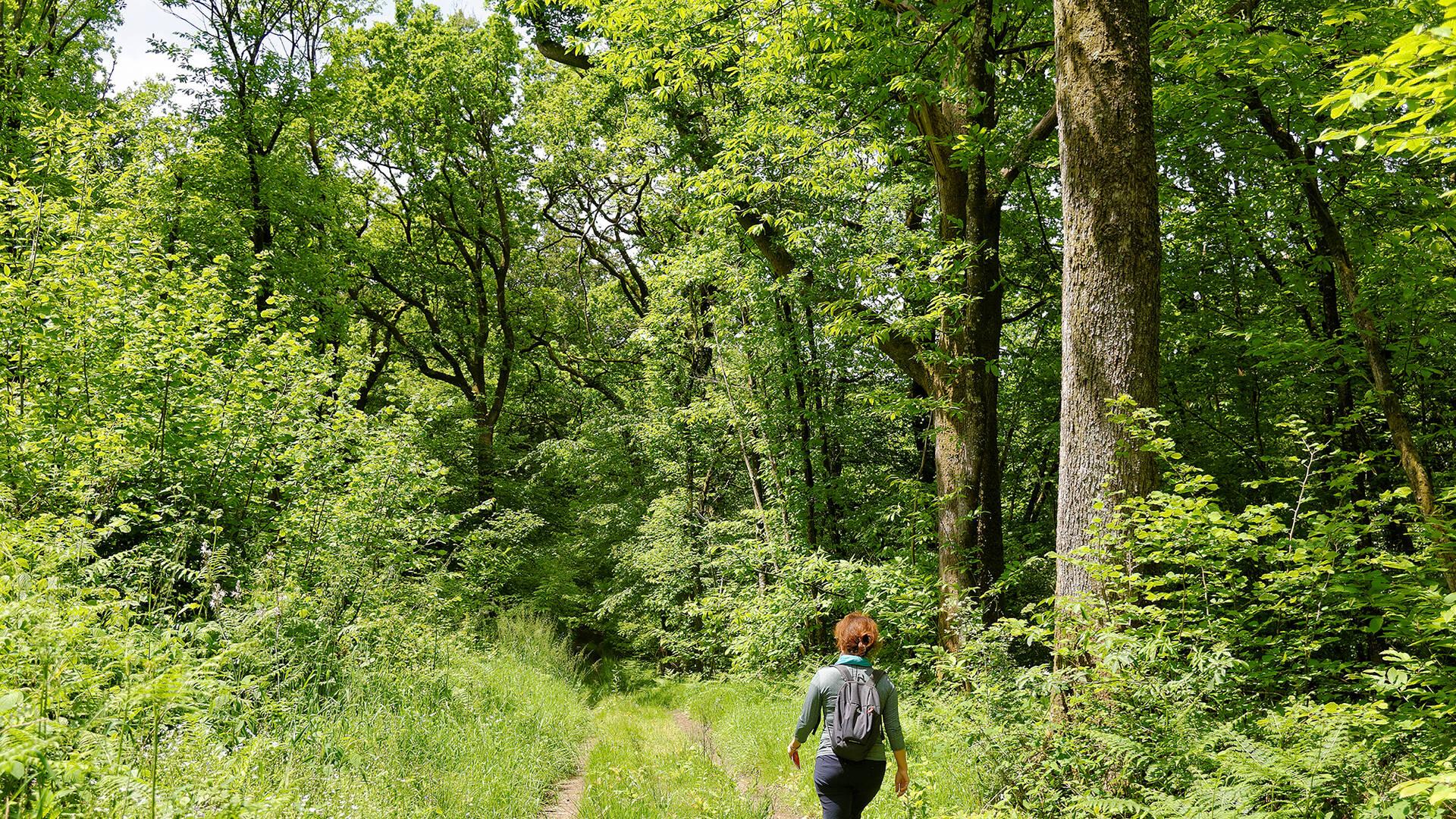 Randonnée en forêt de Chantemerle @PWallCD79