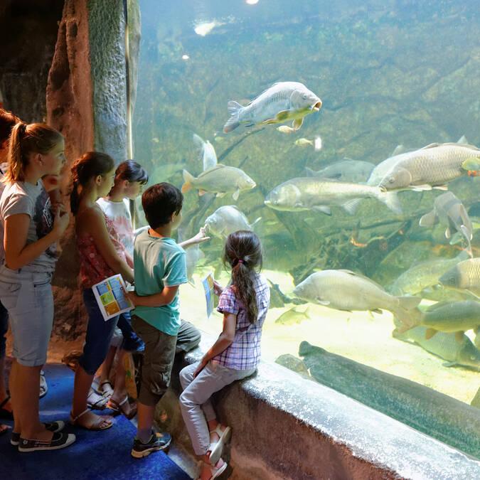 Visite de l'aquarium de Pescalis